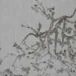 KYOTO GRIS 240 07
